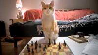 Publicidad con un gato al ajedrez