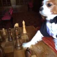 Perros jugando Ajedrez